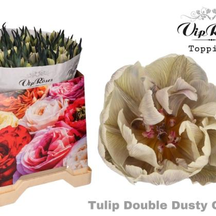 Tulip Dusty Olive