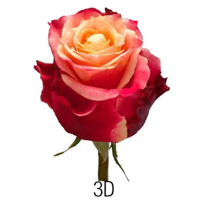 Rose 3D