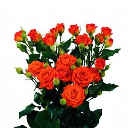 Spray Rose Orange Fire