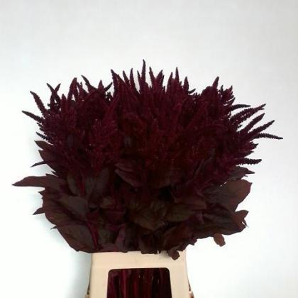 Amaranthus Cruentus Velvet