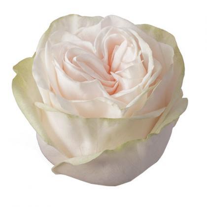 Rose Garden Spirit