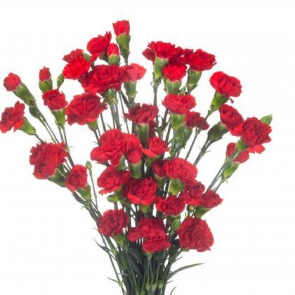 Mini Carnation Red