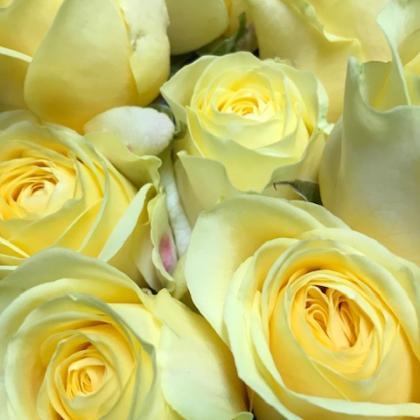 Rose Buttercup