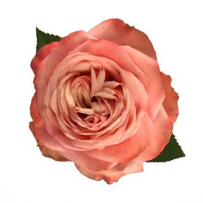 Rose Kahala