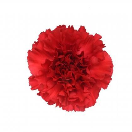 Carnation Red Magic