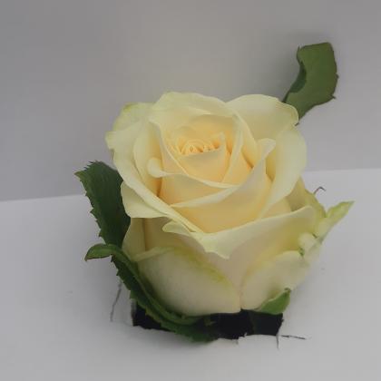 Rose Savannah