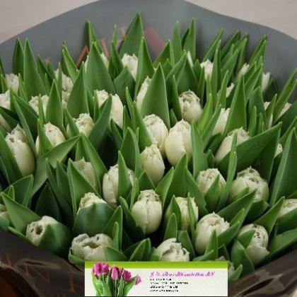 Tulip Smirnoff
